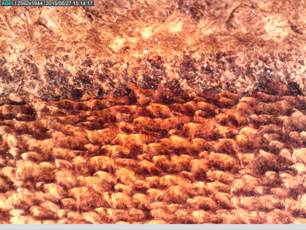 43-AM7115MZTL-leather_50x.jpg